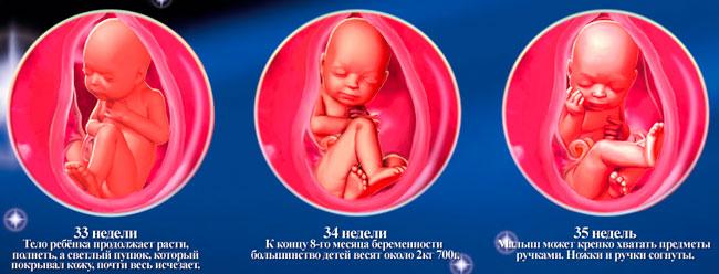 Какой ребенок в 19 недель беременности
