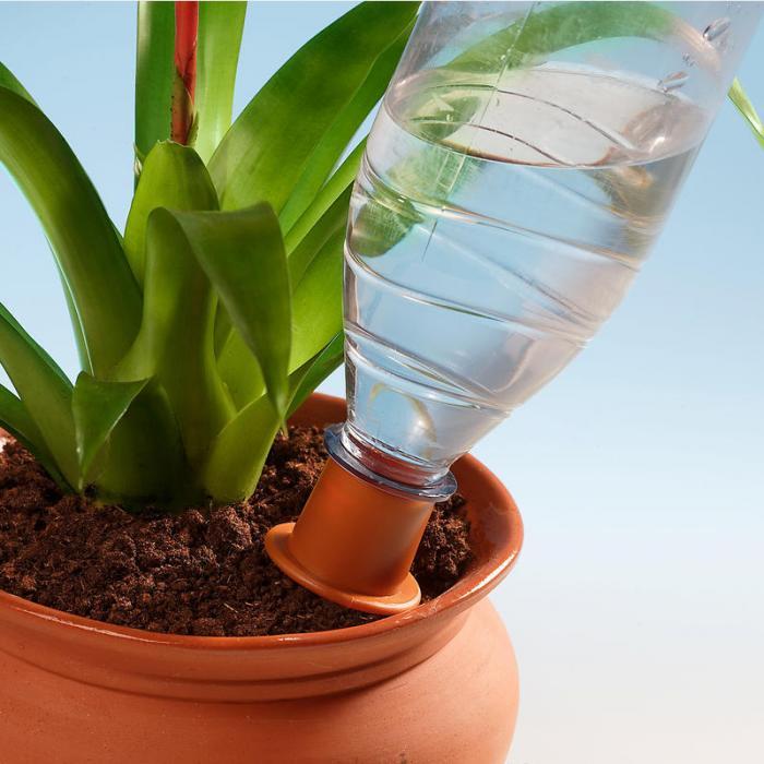 Автополив комнатных растений своими руками фото