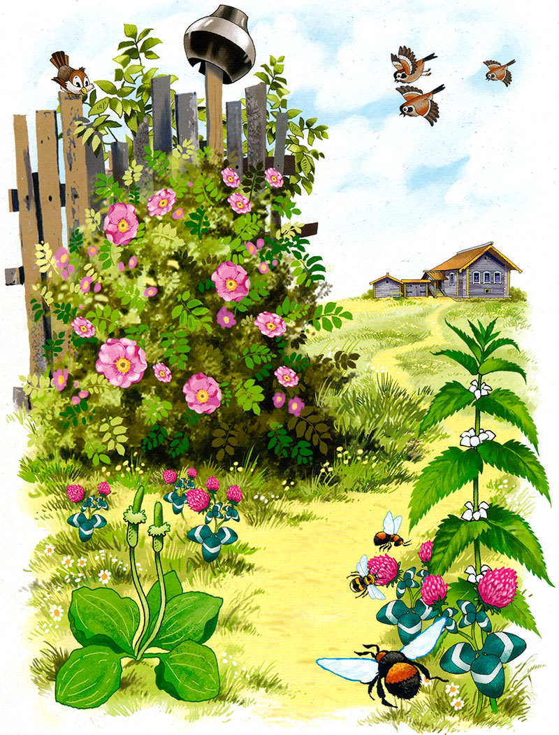 Картинки по теме лето у дошкольников