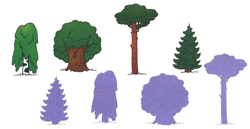 Деревья и их листья картинки и названия для детей