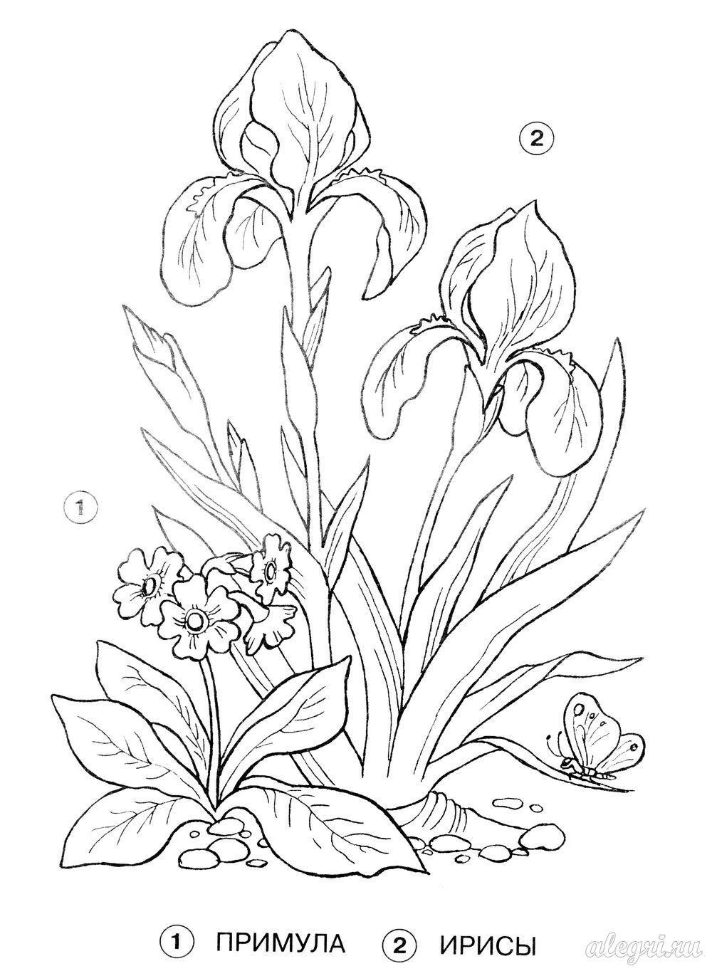Раскраска растений занесённых в красную книгу