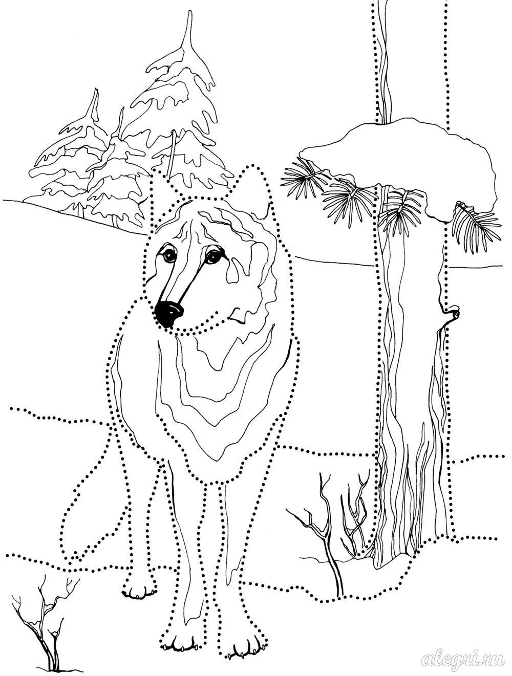 Раскраска. Волк зимой в лесу