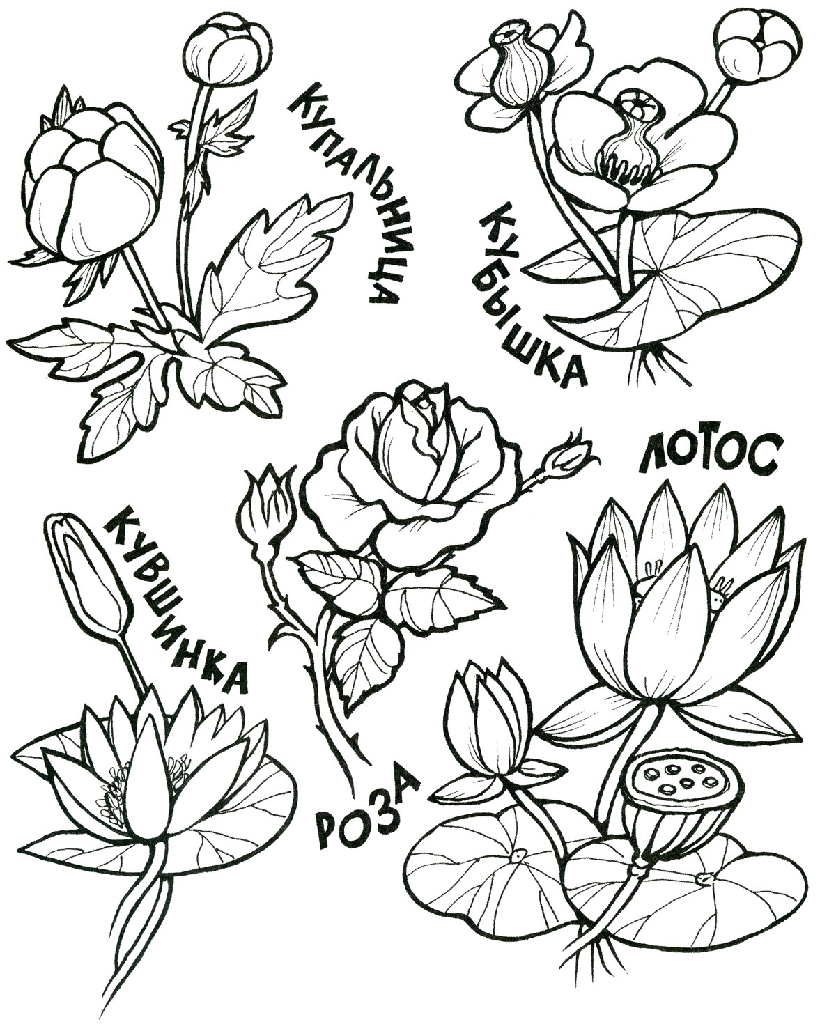 картинки цветов раскраски: