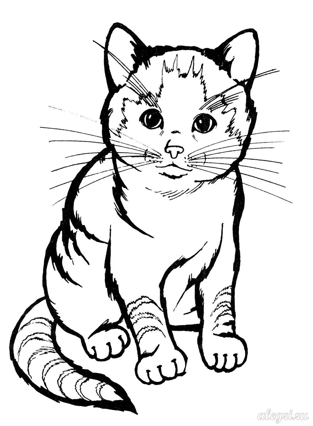 Раскраска. Котёнок