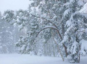 Рассказы о зиме и картинки