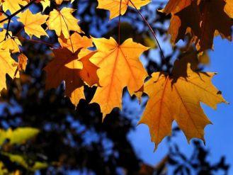 Праздник Осени в начальной школе. Сценарий