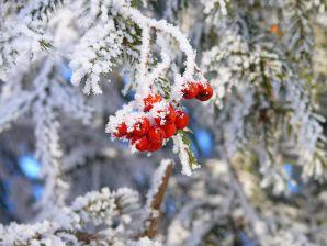 Зимние праздники в нанальной школе