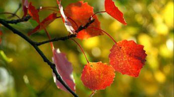 Праздник Осени в старшей группе детского сада. Сценарий