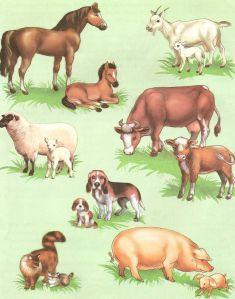 конспект занятия по знакомству с домашними животными