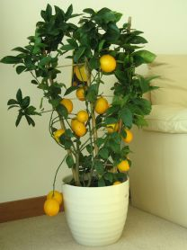 Комнатные растения, обладающие хорошей энергетикой