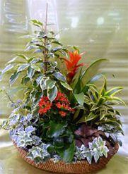 Каталог популярных комнатных растений