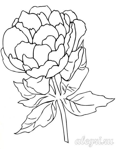 Раскраска для детей 5-6 лет. Цветы